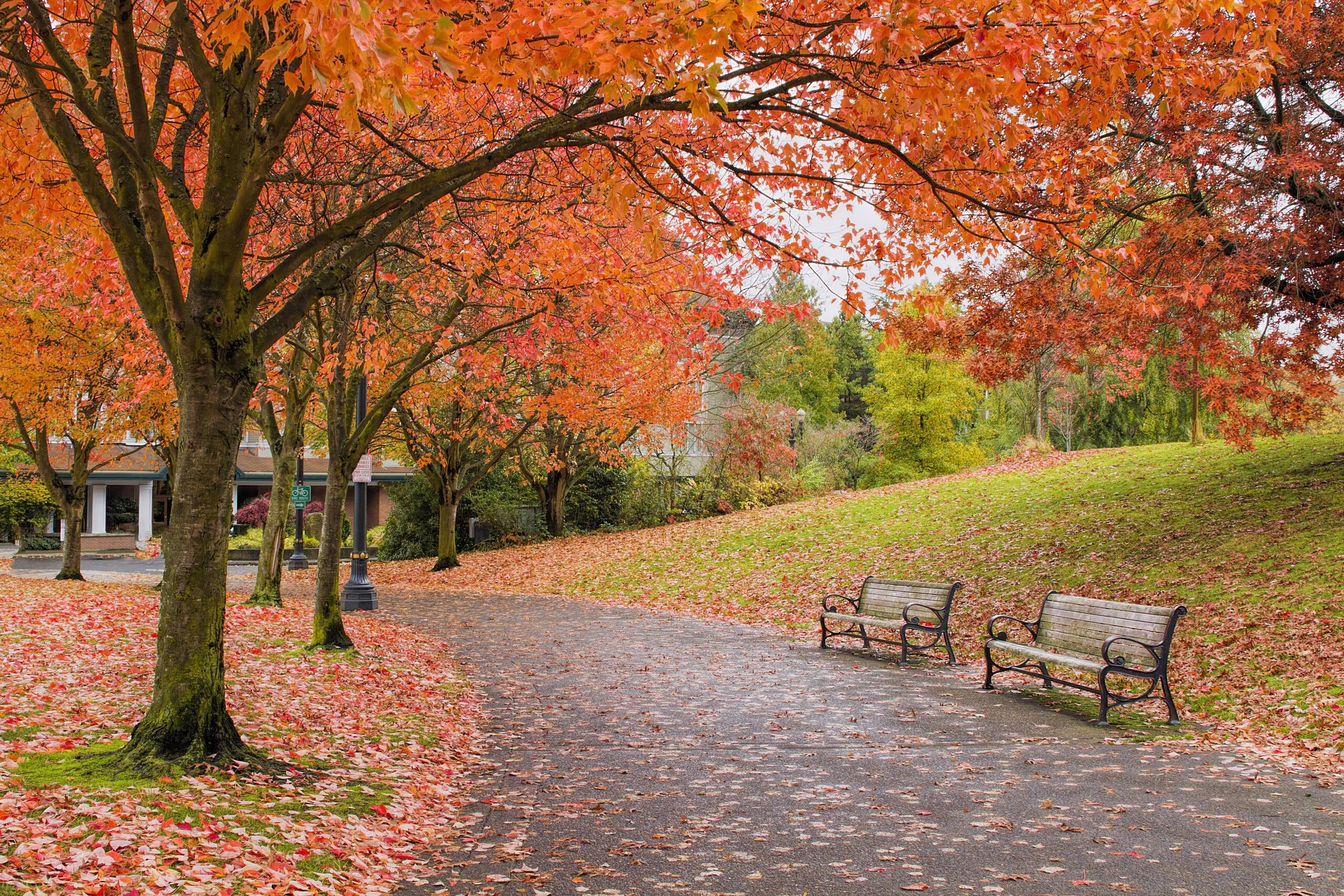 Portland NE
